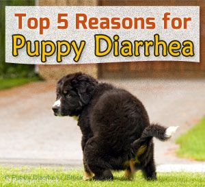 cause of puppy piarrhea