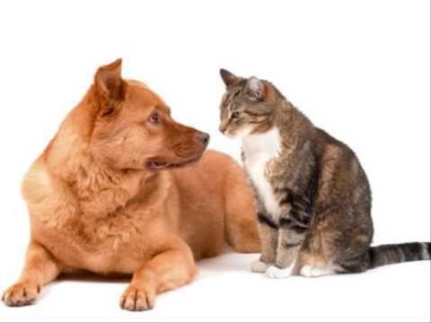 Pesnička Pes a mačka