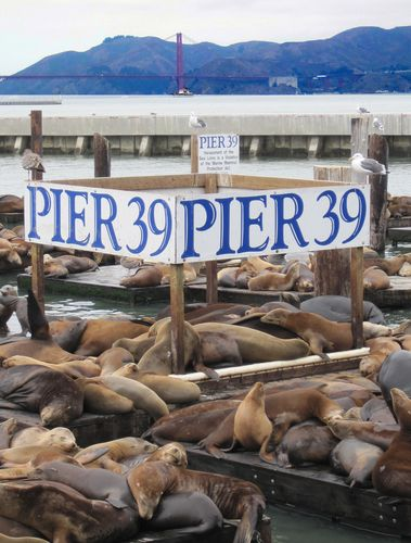 Fisherman's Wharf, San Francisco, CA and the stinky, burping sea lions