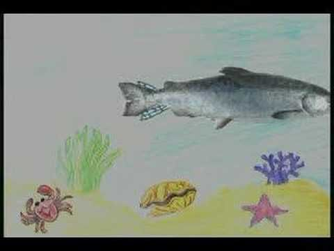 Sammy the Salmon:  salmon life cycle