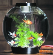 Biorb - Cool Aquarium Design I own one of these looks just like this one