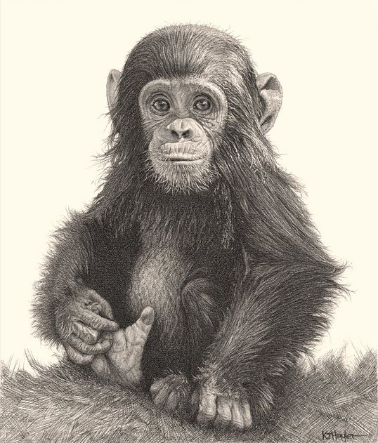 drawing amimals with pencil | incredibly realistic pencil drawings of cute and adorable animals ...