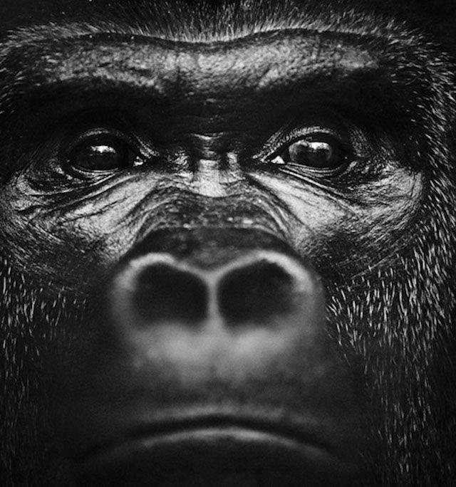 Zita Betoverende foto's van wilde dieren in Afrika Nieuws Bizar