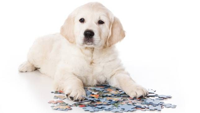 10 brain games to play with your dog | MNN - Mother Nature Network