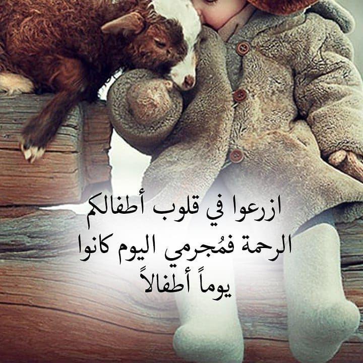 Pin By Hala Muhammed On كلمات Teddy Bear Teddy Animals