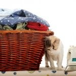 Get Cat Urine Smell Out of Clothes