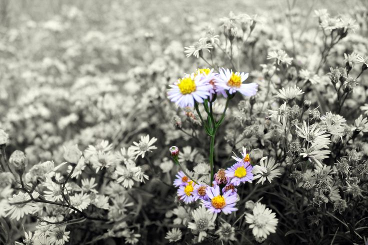 Őszi virág (photo: Beata Bauer) #autumncolors #flowers