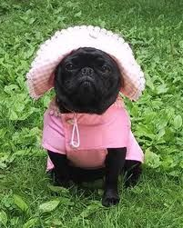 I will dress up my pugs one day and they will probably hate me for it lol