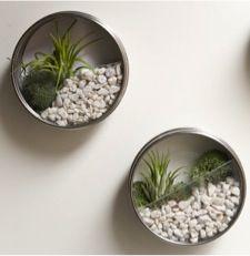 Terrario con latas recicladas