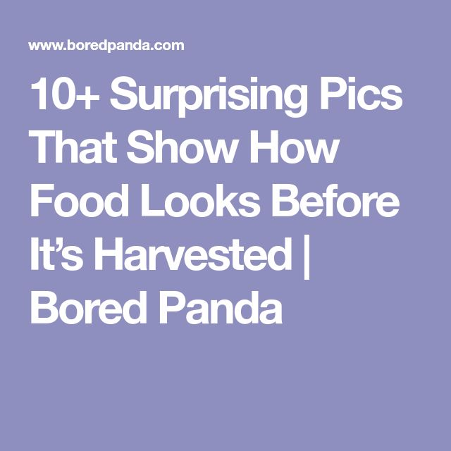 10+ Surprising Pics That Show How Food Looks Before It's Harvested | Bored Panda