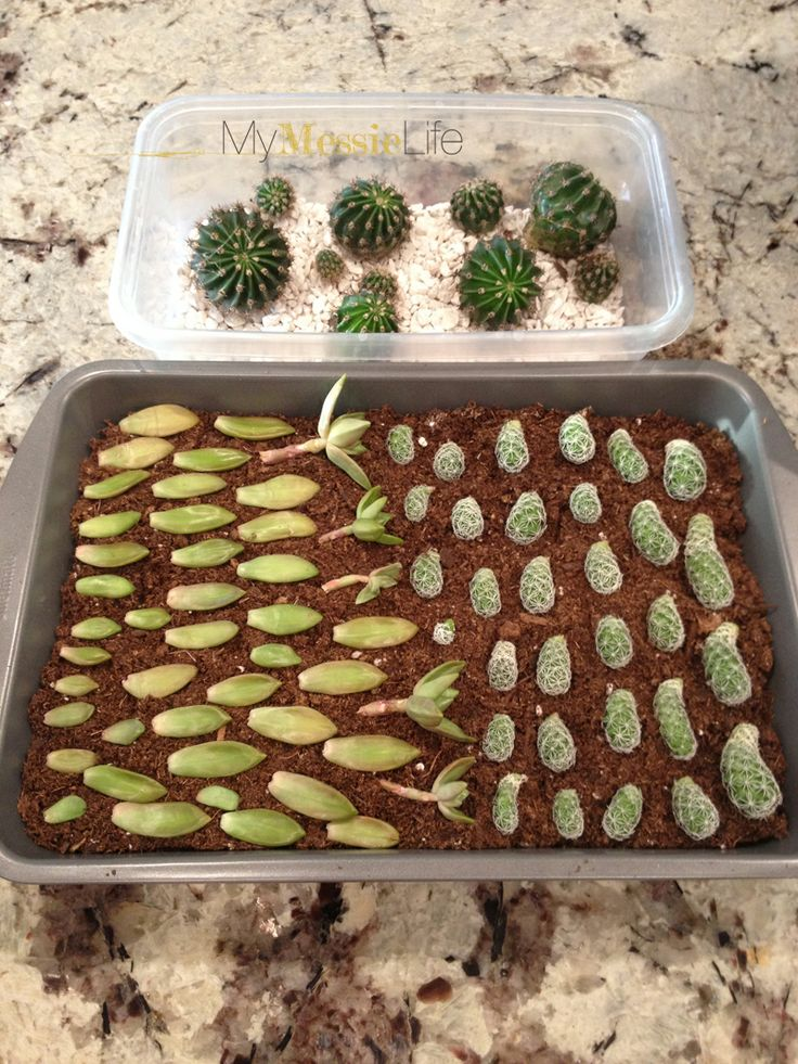 SUCCULENT PROPAGATION from mymessielife.com
