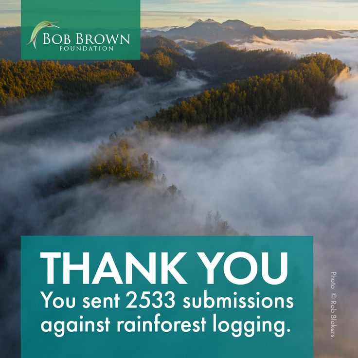 Together we will stop rainforest logging.