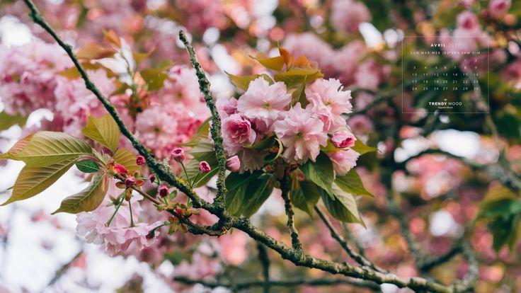 Fond d'écran fleuri pour Avril