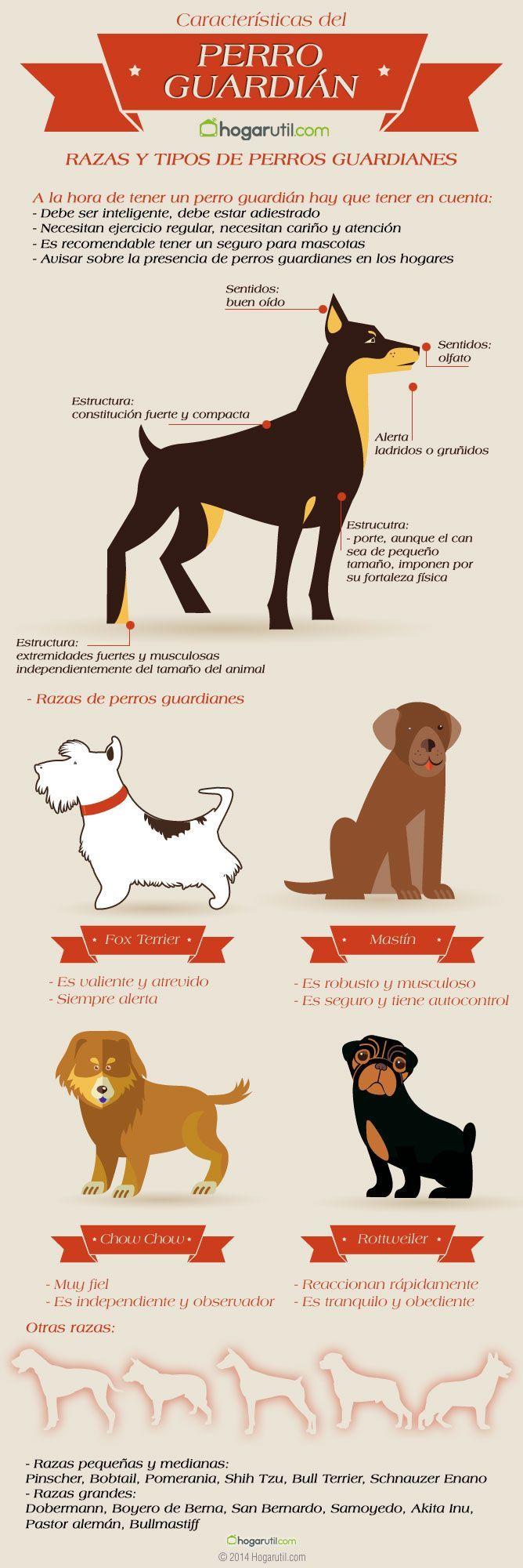 Infografía sobre perros guardián. Te dejamos una infografía con consejos sobre qué características debe tener un buen perro guardián, así como razas de perros guardián. #infografia #mascotas #perros