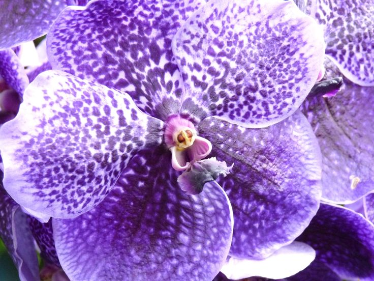 Orchid - photo by Ellerin Eadwine