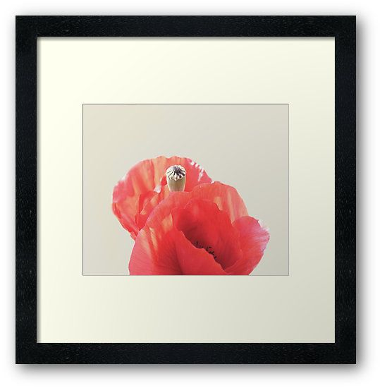 'Poppies' Frame Art Print by ARTbyJWP from Redbubble #artprints #framedart #walldeco #poppies #floral #buyart ---     Abstract close-up of beautiful red poppies. • Also buy this artwork on wall prints, apparel, stickers, and more.