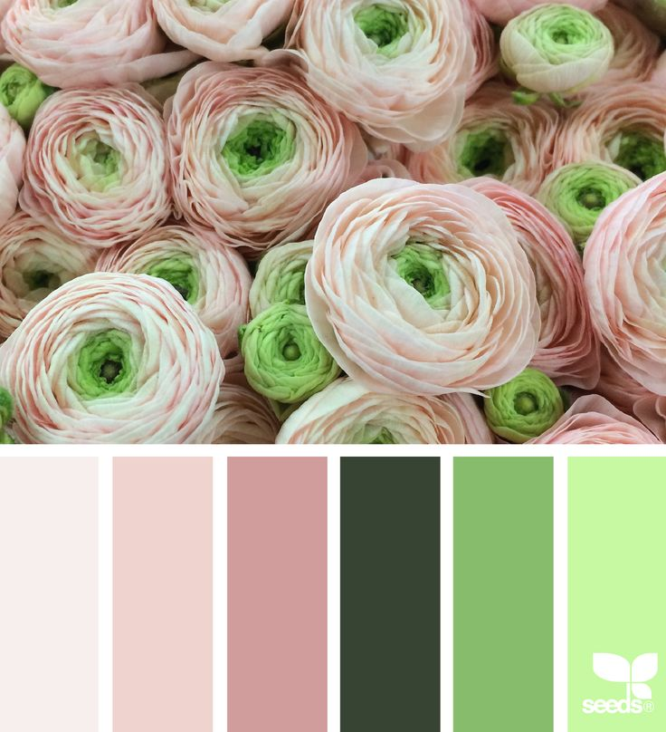 Ranunculus Hues - https://www.design-seeds.com/in-nature/flora/ranunculus-hues-2