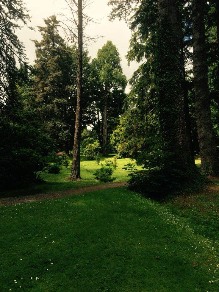 Woodland, Powerscourt, Co.Wicklow