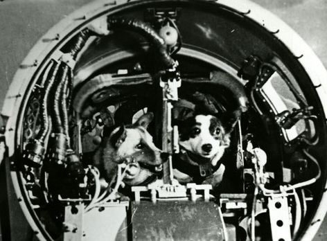 Belka and Strelka in their space capsule
