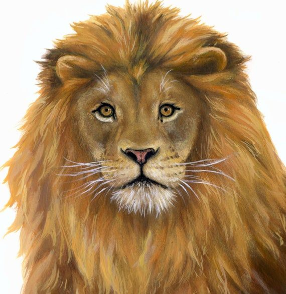 lion sticker, lion decals lion decal Safari 2 Lion,s left /& Right facing Loins Wall Decal Wall Sticker Wall Stickers jungle wall decals