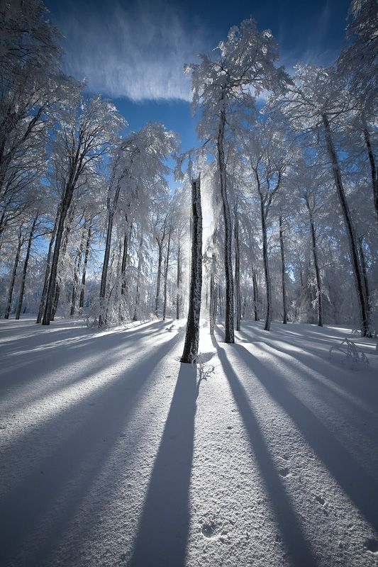 Photo, Forest/Foret, Snow/Neige, Light/Lumière. Winter forest, France
