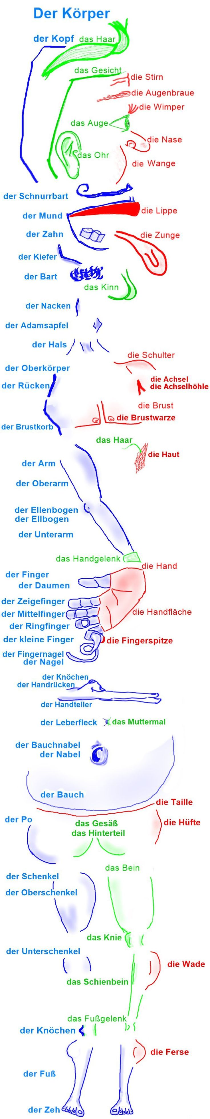 der Körper. Body parts in german. Help learning and memorize German vocabulary with images or Bildwörter. Create or add your own word pin and tag it with #germanmems so we can add it to the Mems board. Aprender vocabulario alemán. Alemão.