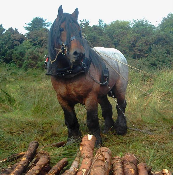 That's one massive horse!  #Horses #Treelogging  http://epic-shirts.com/shirts/horse-shirts/