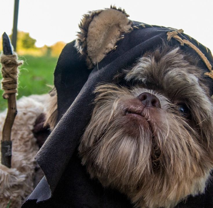 best dog costume EVER...omg I want an EWOK