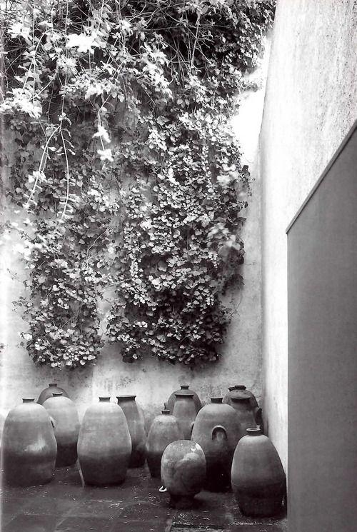 Patio de los Ollas, Casa Barragán, Calle General F Ramírez, Tacubaya, México D.F 1948    Arq. Luis Barragán    Foto: Alberto Moreno -    Patio of Pots, Barragan House, Tacubaya, Mexico City 1948