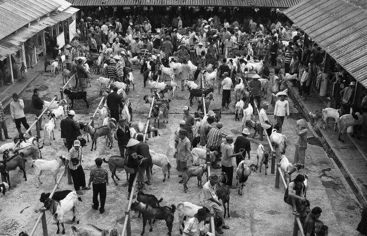 Pasar hewan  ambarawa