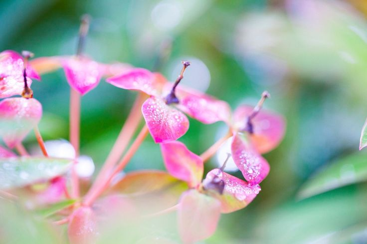 Floral photography in amazing colors