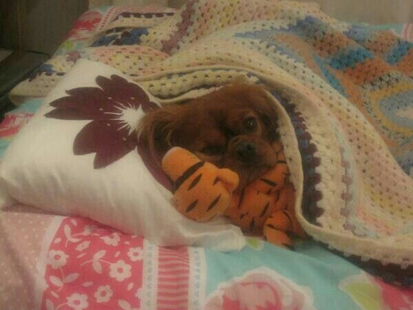 logi tucked up in bed