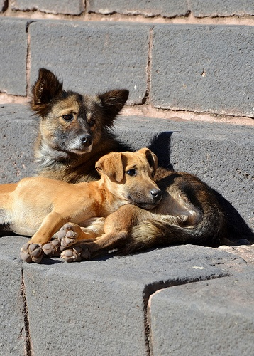 Humans are sick bastards  Help this stray dogs That is what a beautiful human does! Yes there are good humans and bad humans! Which are you? Let me ask?