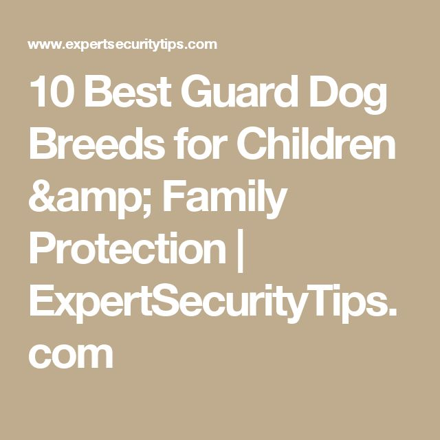 10 Best Guard Dog Breeds for Children & Family Protection | ExpertSecurityTips.com