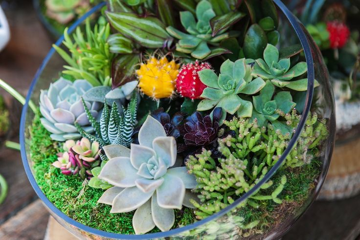 Bring all of the wonder of an outdoor garden into your home with a gorgeous terrarium. Find out how.