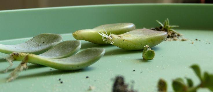 Urban Jungle Bloggers: Botanical Zoom by @mintundmeer