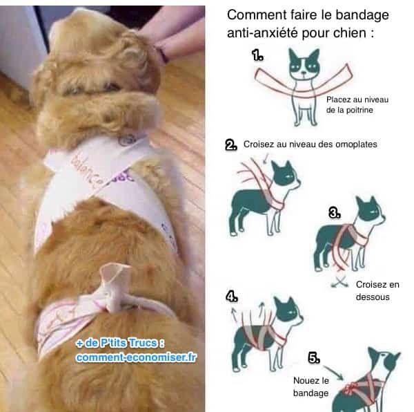 Comment faire un bandage anti-anxiété pour chien pendant feux d'artifice