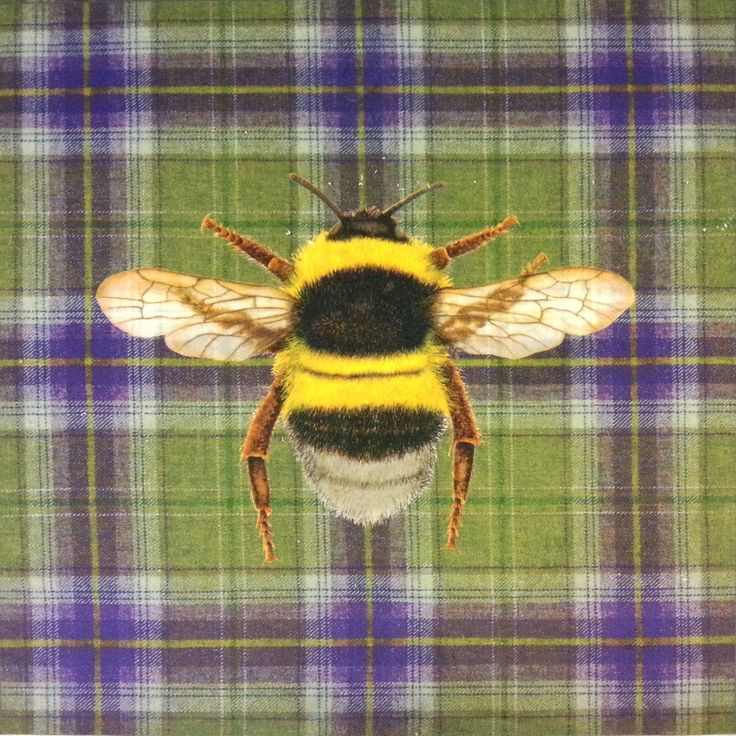 Velvet Bumblebee English Wool Check Cushion Panel Green  £6