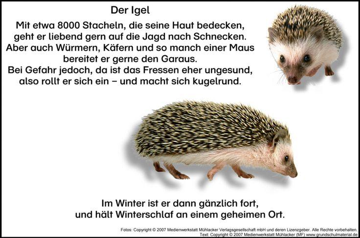 hedgehog learning poem