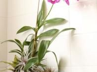 Add other  air plants , fill in with orchid bark, give it a good drink of water and attach it to the wall.