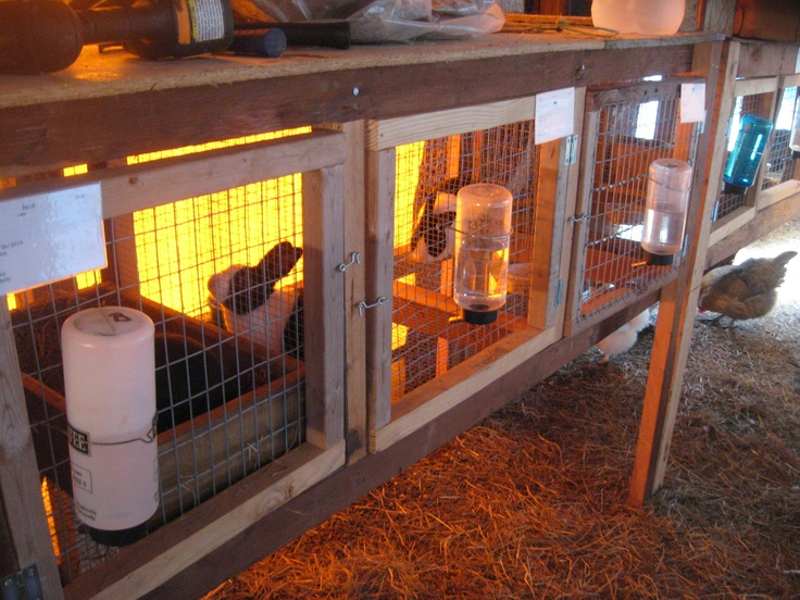 Cool rabbit cages