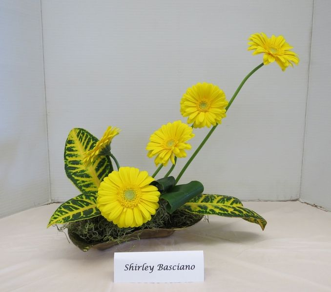 The Design Challenge Container. This container will be given to a member of the Mid Island Floral Art Club each month and they are to make a design and bring it to the next meeting. This container is a shallow sort of yellow green and is quite hard to design in. Keep watching to see what it looks like when it is returned to the May 2015 meeting. Maybe it will not be yellow green, watch and see.