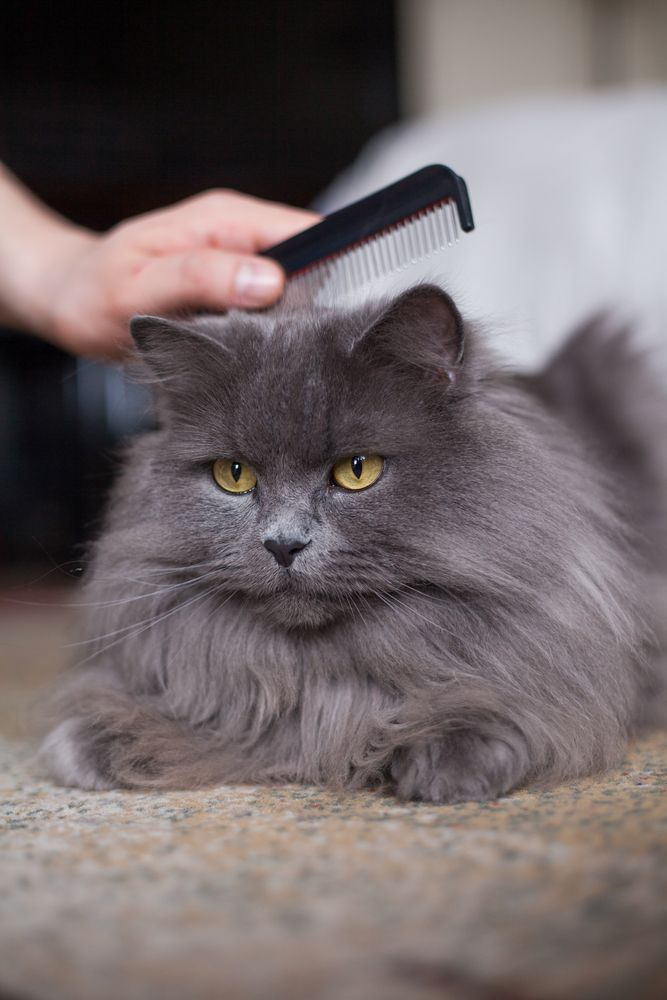 8 tips for dematting your cat