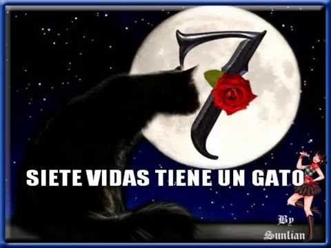 SIETE VIDAS TIENE UN GATO Antonio Flores