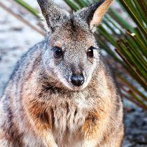 Admirals Inn - Google+ Tammar Wallaby Kangaroo Island