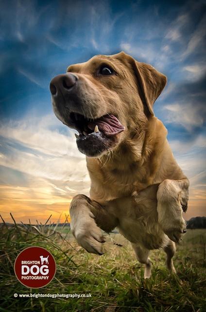 AWESOME shot- brighton dog photography - Georgie by brightondogphotography, via Flickr