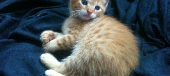 Meet Our New Fur-Baby Phoenix!