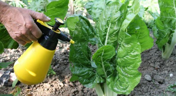 Préservation des sols et sans danger pour l'homme... http://www.bioalaune.com/fr/actualite-bio/28851/entreprise-francaise-cree-desherbant-naturel-remplacer-roundup