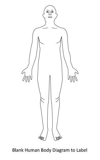 full human body diagram
