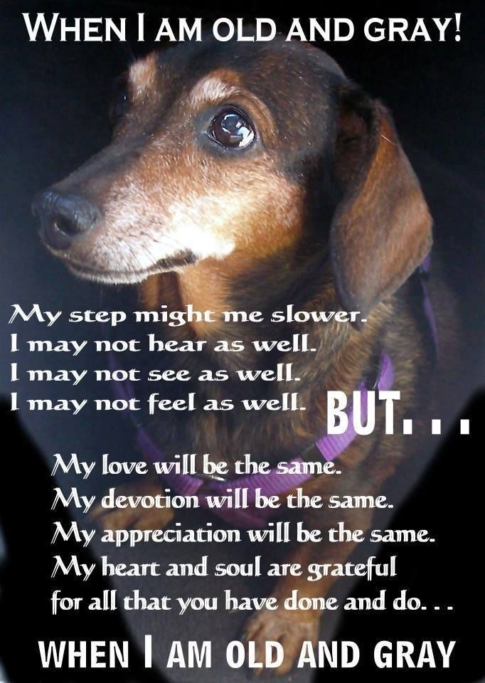 Senior pets need love too.   If you live in Ontario, Canada you can request an application to adopt a senior dachshund through Canadian Dachshund Rescue (Ontario). Please email us at mailto:adopt@wienerdogrescue.com